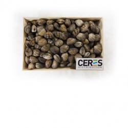 Crevette entière cuite réfrigérée s/at 60/80 le KG
