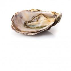 EBI FRIED (CARTON DE 10 BARQUETTE DE 300G) - SURG