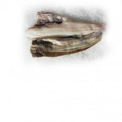 Prépa. noix st Jacques US S/C 10/20 - Boite de 1kg